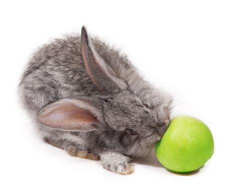 fleecy: rabbit isolated on white background