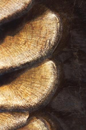 mirror carp: texture of fish scales close-up