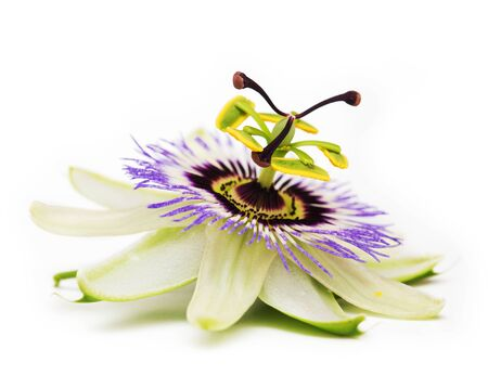 passionflower: Passionflower. Isolated on white background