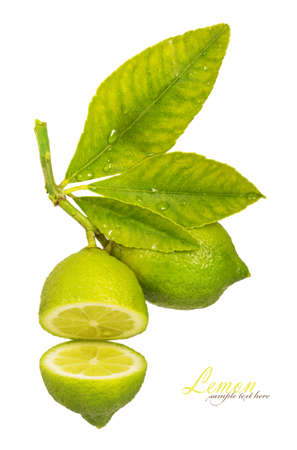 lemon tree: Juicy, beautiful lime with leaves isolated on white background Stock Photo