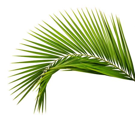 vintage: Folha de palmeira