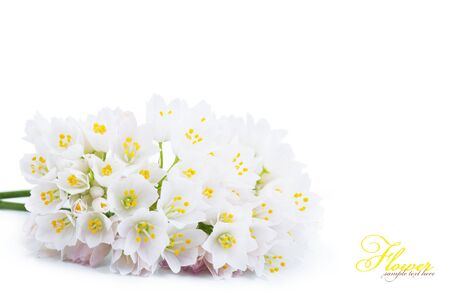 white flowers: Background of white flowers