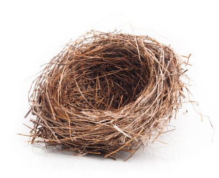 Empty nest isolated on white background Archivio Fotografico
