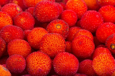 ericaceae: background of red fruits of Arbutus unedo.