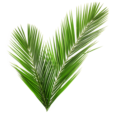 Palm leaf for your design. Isolated on white background