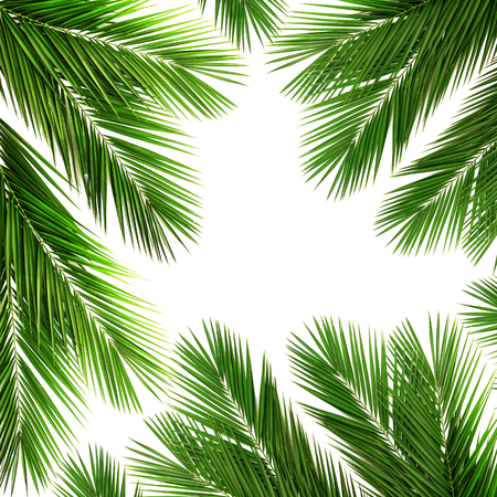 Palm leaf for your design.Frame of palm leaves. Isolated on white background Stock Photo