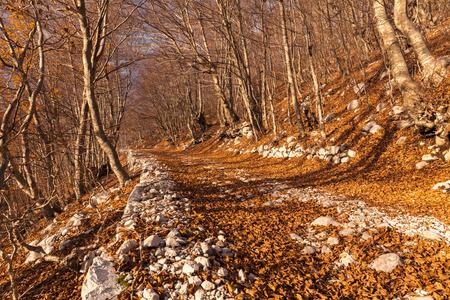 Autumn landscape with bright fallen leaves.