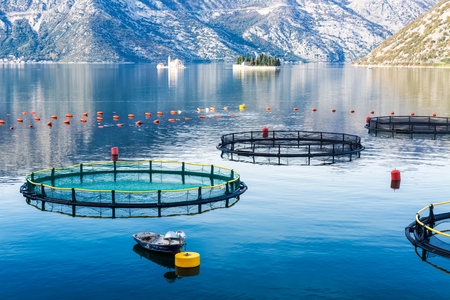 net: Big Cages for fish farming and a little boat in Montenegro