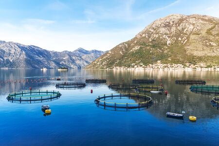 net: Big Cages for fish farming in Montenegro