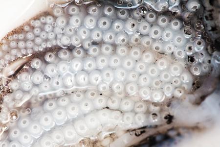Raw cuttlefish on white background Stock Photo