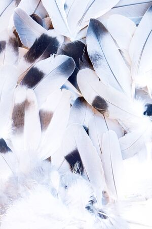 Feathers of a pigeon close-up.
