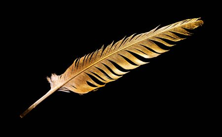 The feather is covered with gold paint close-up. Pen for calligraphy. Golden feather. 스톡 콘텐츠