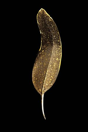 The feather is covered with gold paint close-up. Pen for calligraphy. Golden feather. Archivio Fotografico
