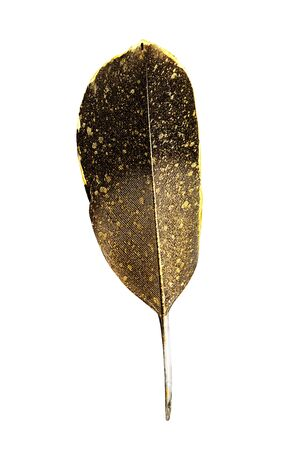 The feather is covered with gold paint close-up. Pen for calligraphy. Golden feather. Stock Photo