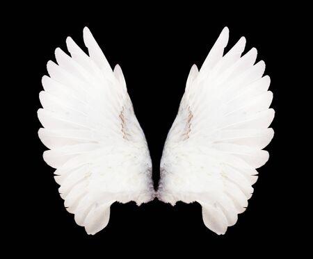 Alas de ángel aisladas sobre fondo negro. Las alas de la paloma.