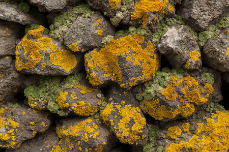 mossy: Mossy rock texture