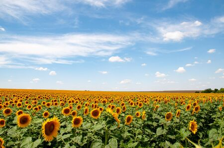 Beauty of summer nature in countryside of Ukraine. Organic farming. Summer rural landscape of countryside in Ukraine. Panoramic view of picturesque land.