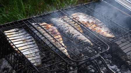 Soft focus through smoke to delicious grilled mackerel fish inside barbecue grid atop smoldering charcoal. Mediterranean local sea food preparation using outdoor brazier