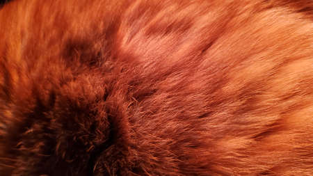 Bright red animal fur texture closeup. Furry back of ginger tabby cat. Animal hair fibers Banque d'images