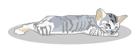 Grey sleepy tabby kitten lying down for take a nap
