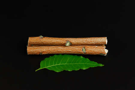 Medicinal neem sticks and neem leaf isolated on black background. Green leaf in South East Asia. Azadirachta indica var. siamensis valeton. Stock Photo