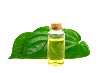 Betel Essential oil in bottle and green leaf isolated on white background. Stock Photo
