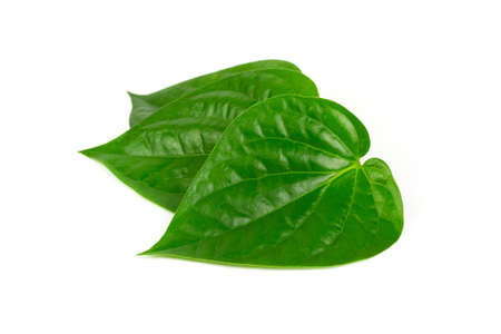 Betel leaf isolated on white background. Betel is a vine that has the heart shaped leaf. Trees that can extract essential oil from leaves. Stock Photo