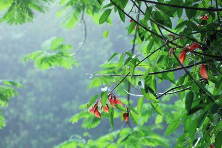 trees with raindrops on it Stock fotó - 101420563