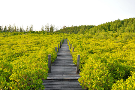 formatting: The old wooden bridge in the mangrove forest
