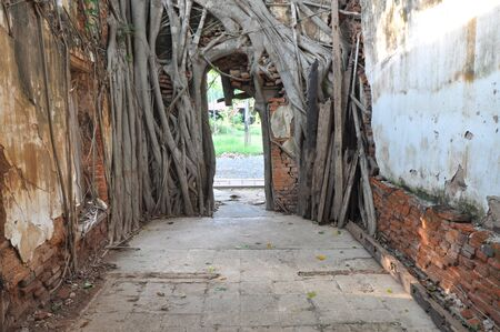 cling: Bodhi tree roots cling to the door Stock Photo