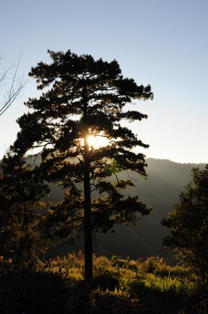 i like: I like the silhouette of trees Stock Photo