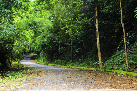 chiangrai: A route on trees forest, Chiangrai, Thailand.