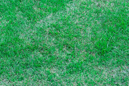 Green grass texture background. It best for creative, wallpaper, and abstract.