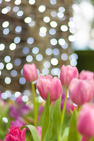 Beautiful of colorful tulip flowers bouquet on field in green garden background.