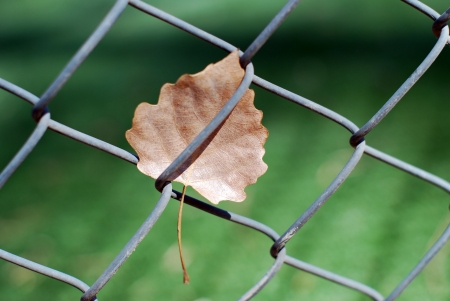 Chain link fence and dead leaf Stock Photo - 14209579
