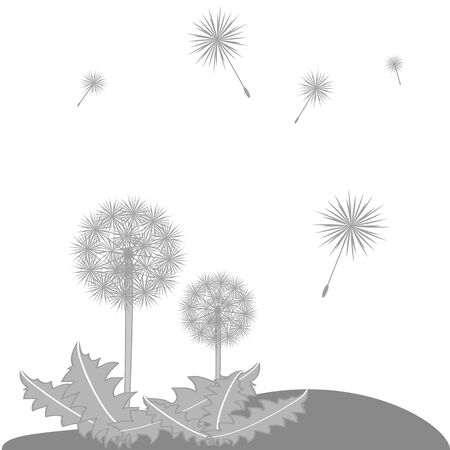 Dandelion seeds blowing from stem, vector illustration Vector