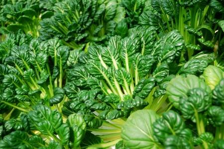 rapa: Chinese flat cabbage Stock Photo