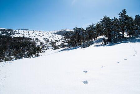 stone volcanic stones: Hallasan mountain at Jeju island Korea  in winter