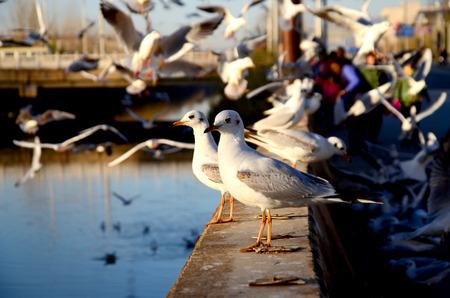 leisurely: Leisurely pigeons