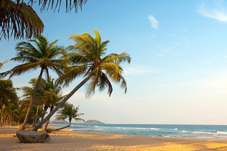 Exotic, beautiful and secluded beach with palm trees in the foreground and the sea. The beach is deserted