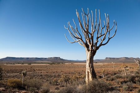 extensive: Extensive landscape - mountains and plains in South Africa - horizontal format - Copy Space