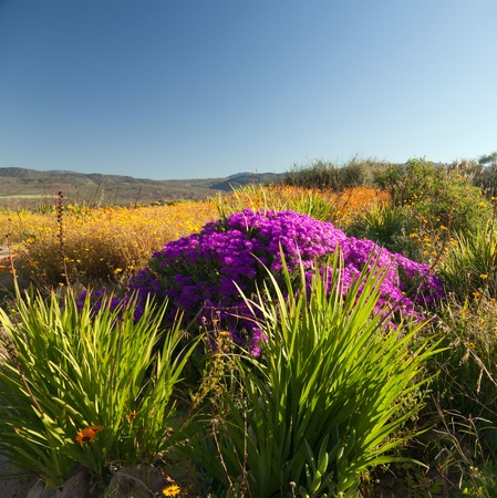 Landscape with beautiful flowers and plants - square