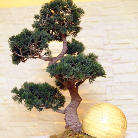 bonsai tree: A bonsai tree with decorations-square