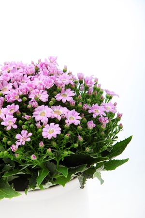 Close-up shot of pink flowers bouquet on white background Stock Photo - 13008405