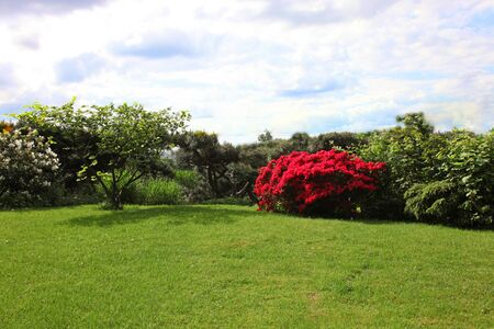 azaleas: Backdrop of a beautiful green lawn bordered by colourful red flowering shrubs in late spring