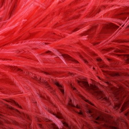 estola: Detalle del primer de una mullida roja pluma de la avestruz boa suave o rob� usados ??como un accesorio de moda elegante, Foto de archivo