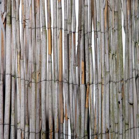 enclosing: Dried bamboo fence with upright bamboo canes bound together by wire, background pattern and texture Stock Photo
