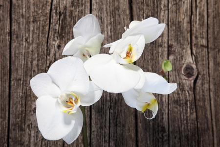 Overhead view of a spray of fresh white phalaenopsis orchids on an old cracked weathered wooden surface photo