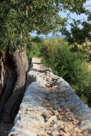 recedes: View along the top of a rustic old stone wall running past trees and green vegetation