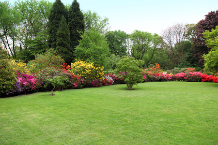 garden landscape: Beautiful manicured lawn in a summer garden with a border of bright colourful flowering shrubs and trees
